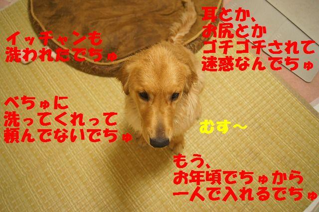 DSC08883_20120331213117.jpg
