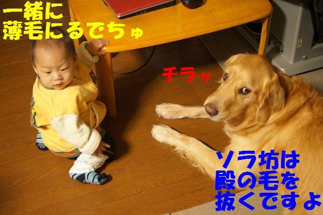 DSC08912_20120112203738.jpg