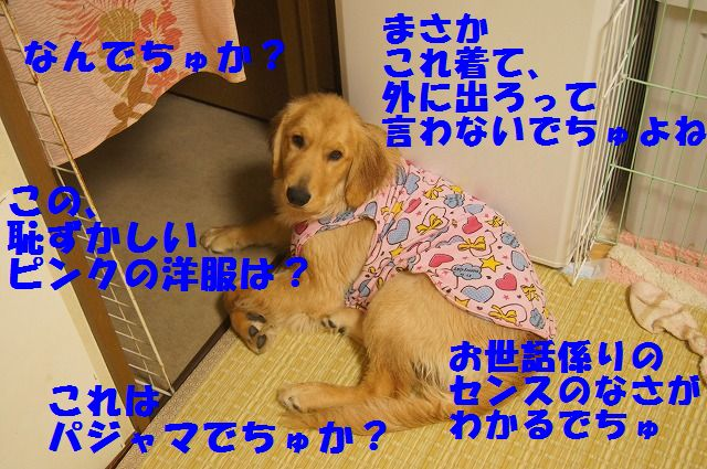 DSC08916_20120331213115.jpg