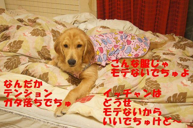 DSC08919_20120331213133.jpg