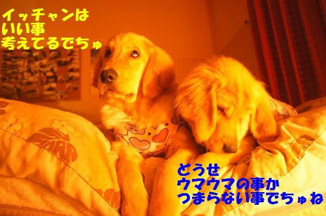 DSC08946_20120402233908.jpg