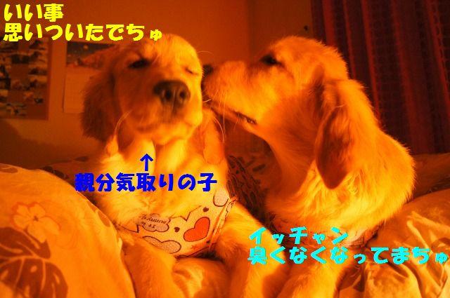DSC08958_20120402233907.jpg