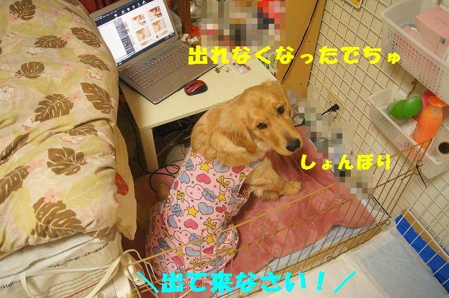 DSC08963.jpg