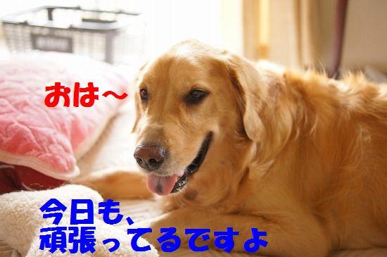 DSC09073.jpg