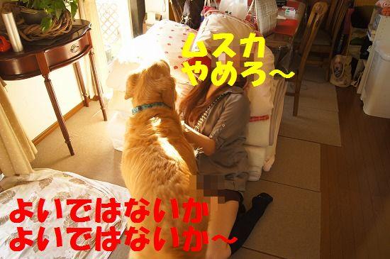 DSC09139_20111127204641.jpg