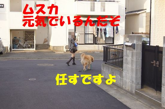 DSC09216.jpg