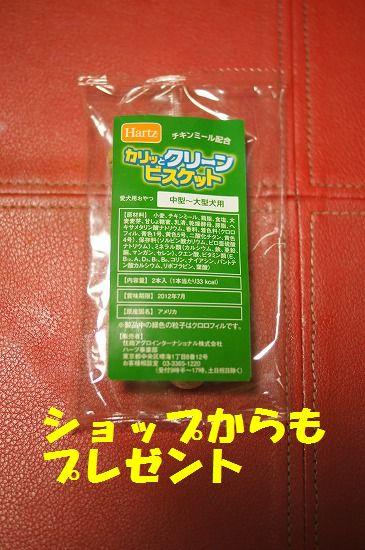 DSC09315_20111127205302.jpg