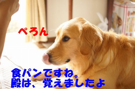 DSC09316.jpg