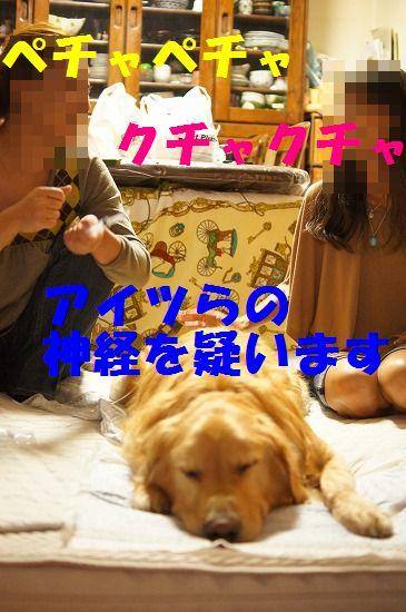 DSC09442_20111120231533.jpg