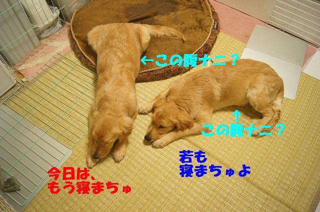 DSC09464.jpg