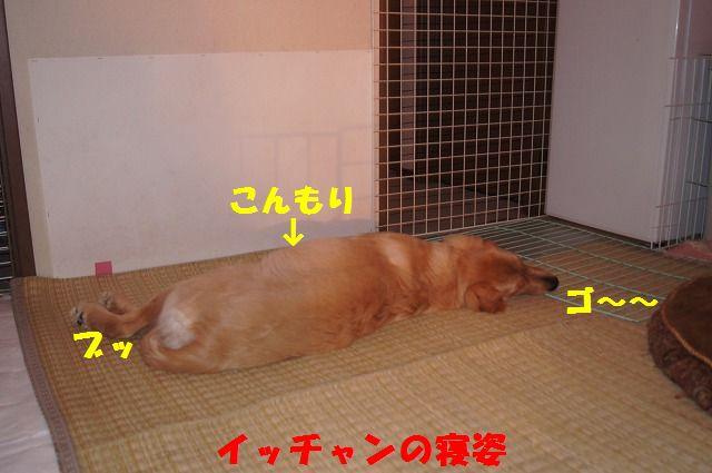 DSC09471_20120414192527.jpg