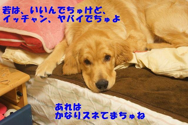 DSC09504.jpg