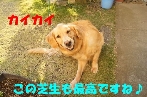 DSC09532_20111127210256.jpg