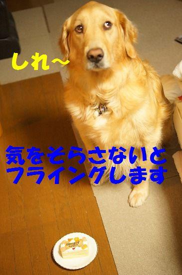 DSC09698.jpg