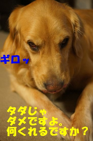 DSC09762.jpg