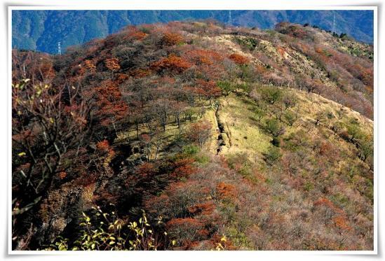 11.10/29塔ノ岳