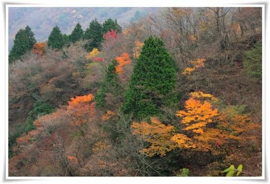 11.11/4塔ノ岳