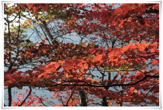 11.11/17塔ノ岳