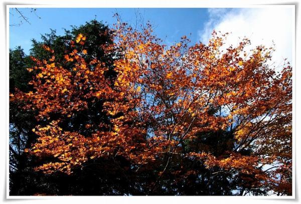 11.11/22塔ノ岳