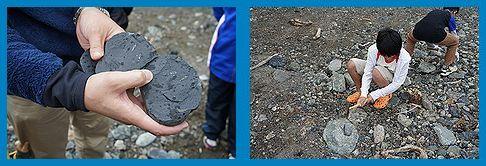 化石採取2