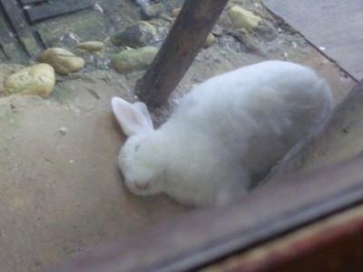 眠ってるにーちゃん