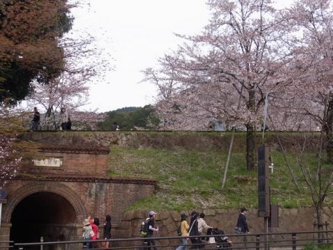 20120415京都桜ラン0264