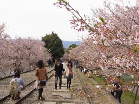 20120415京都桜ラン0261