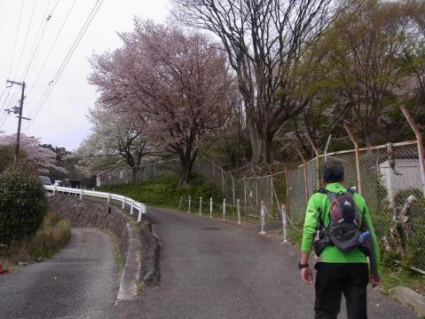 20120415京都桜ラン0256
