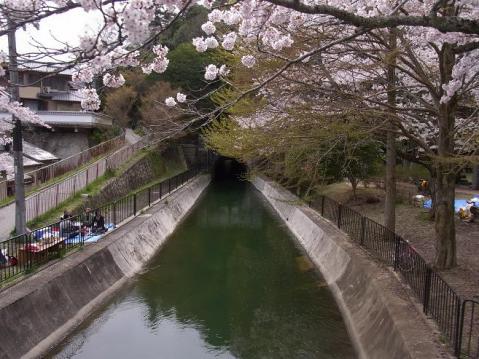 20120415京都桜ラン0255