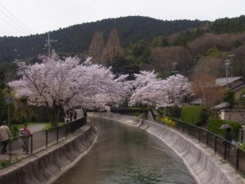 20120415京都桜ラン0251