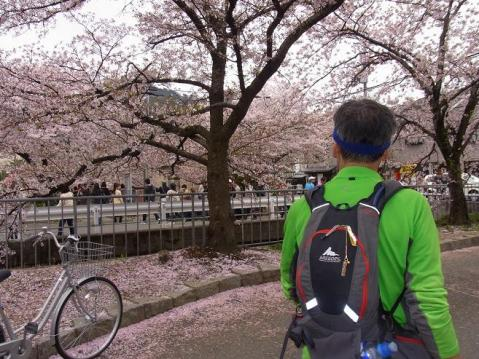 20120415京都桜ラン0234