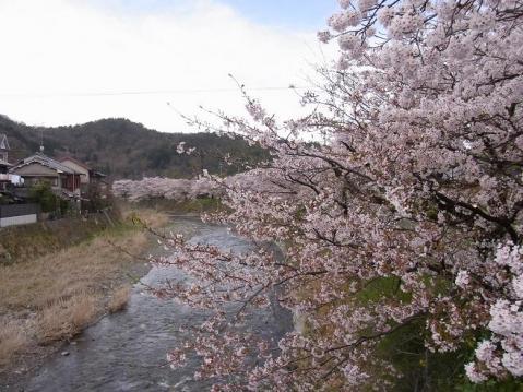 20120415京都桜ラン0224