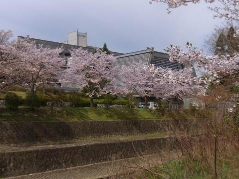 20120415京都桜ラン0223
