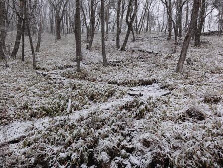 雪、ゆき、雪7