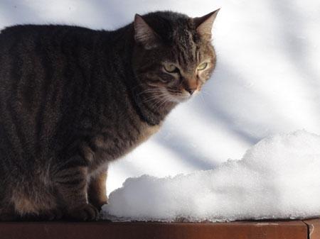 雪が融けて?5