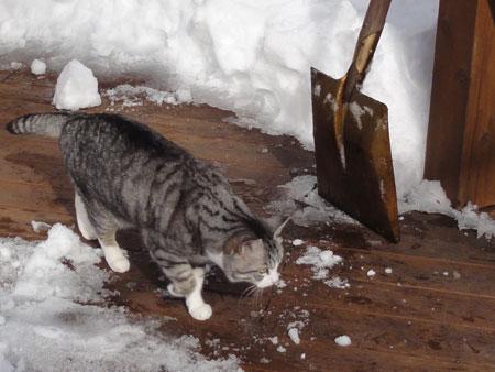 デッキの雪掻き1
