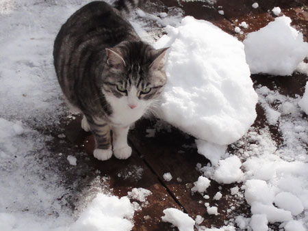 デッキの雪掻き2