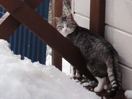 デッキの雪掻き5