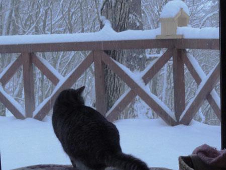 雪、雪の朝1