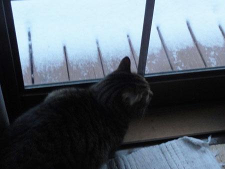 雪、雪の朝2