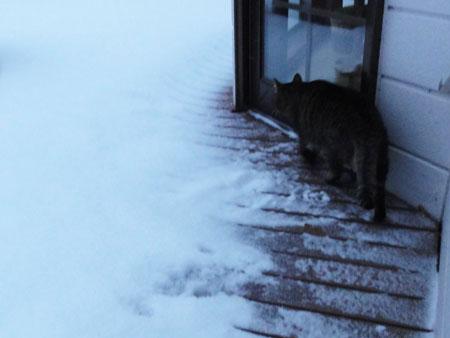 雪、雪の朝3