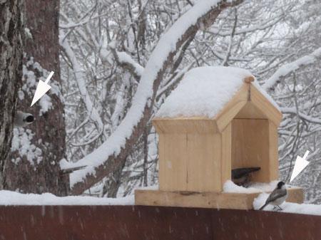 雪、雪の朝9