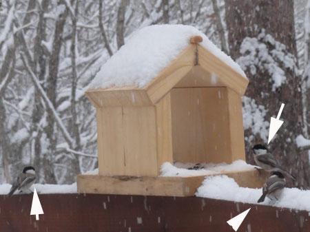 雪、雪の朝11