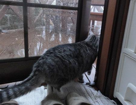 雨・・・氷雨2