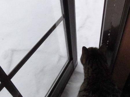 雪、雪、雪の朝2