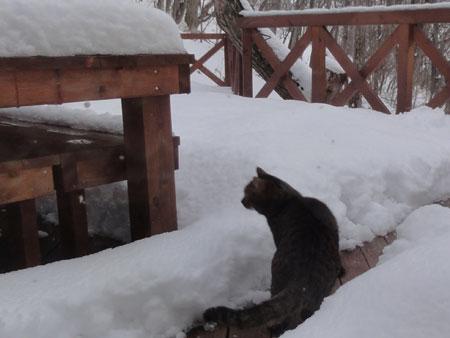 雪が積もって2