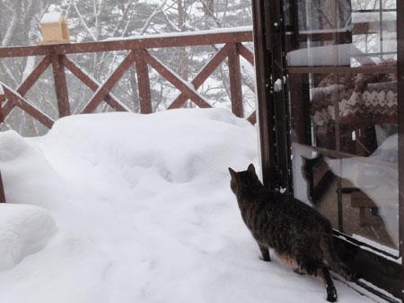 雪、雪、雪の朝4