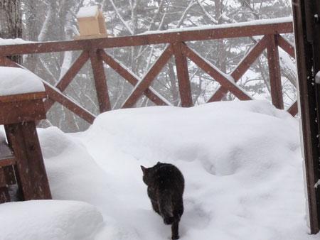 雪、雪、雪の朝6