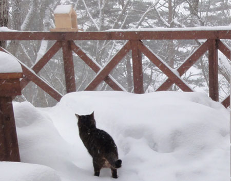 雪、雪、雪の朝7