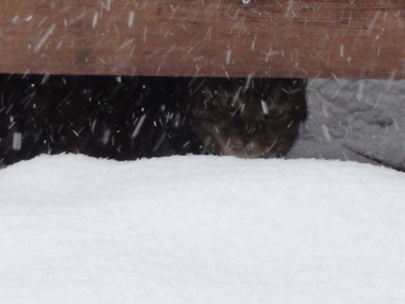 雪、雪、雪の朝8